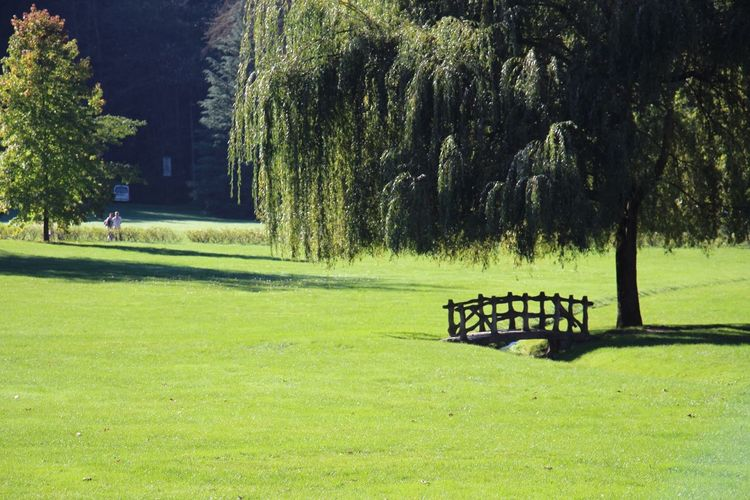Beautiful Trees in a Park ! Landscape Nature