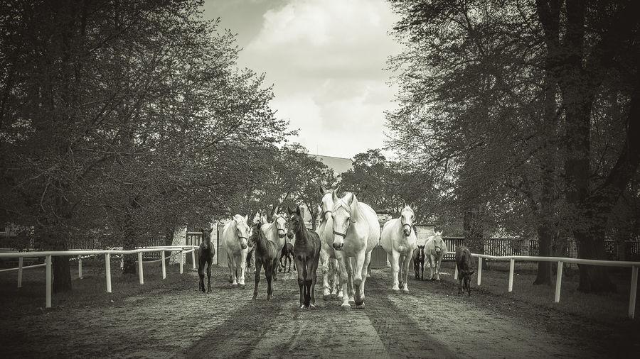 Horses 35mm