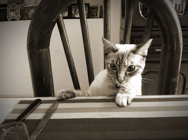 Taking Photos Cat Cute Cute Pets My Cat Sepia Check This Out Pets