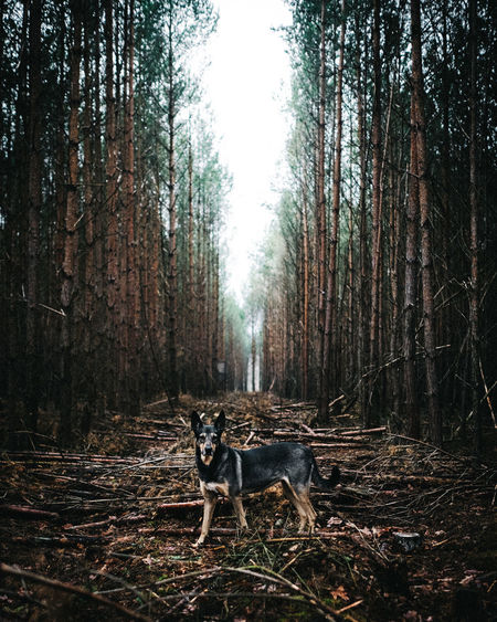 Mit Hund im Wald Tree Forest Animal Mammal Animal Themes Land Plant Domestic Animals One Animal Pets Domestic WoodLand Tree Trunk Trunk Nature Portrait Day Vertebrate Looking At Camera Dog No People Outdoors Dogs Of EyeEm EyeEmNewHere EyeEm Best Shots 2018 In One Photograph