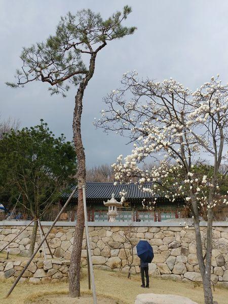 Tree Playground Outdoors Nature Beach Day Beauty In Nature People Sky Bongeunsa Seoul, Korea V20