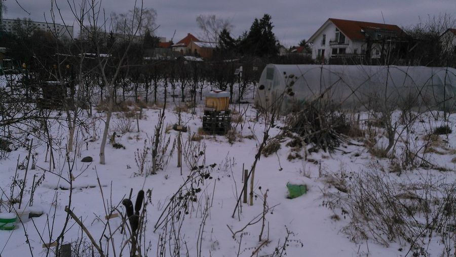 Plants growing on snow covered field by houses and trees