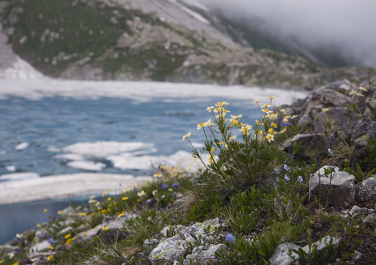 Flowers over the mountain river Cloudy Sky Meditating Nature Nobody Mountain River Macro Photography Environment Grass Snow Ice Water No People Traveling Hiking Trail Caucasus Mountains The Traveler - 2018 EyeEm Awards