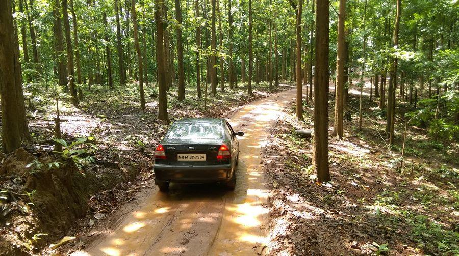 The Drive The Purist (no Edit, No Filter) Car Lovetotravel Adventure Roadtrip Forest Path Denseforest Adrenaline Junkie Muddy Road Excitement Fun Memories Travelbug Wanderlust Lush Green Roadtonature