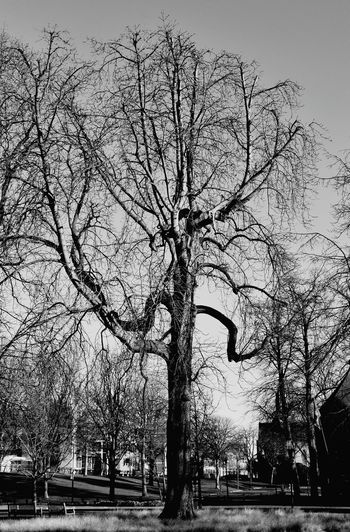 Tree Clear Sky Outdoors Nature Park Castle Park Helmond Medieval Castle Black & White Adapted To The City