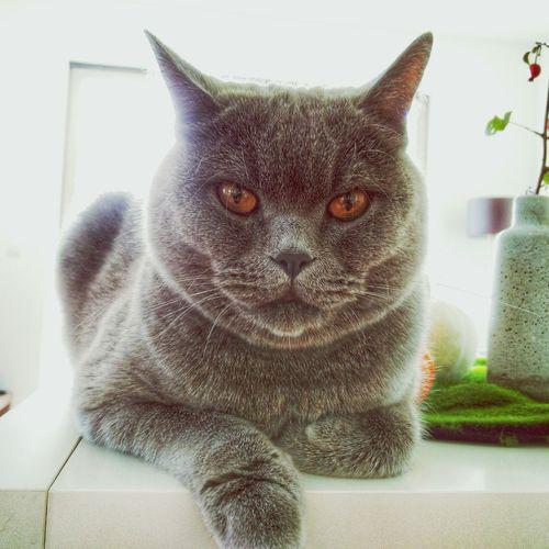 Pets Pet Haustiere Haustier Katze Katzen Cat