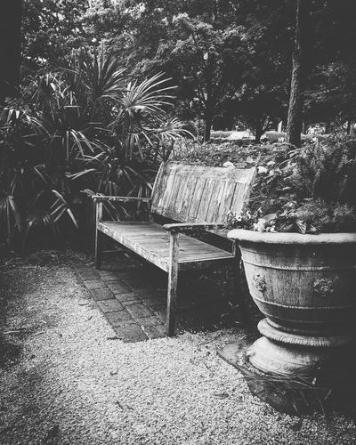 Black and white corner of the gardens No People Day Nature Outdoors Plant Sunlight Tree Built Structure Architecture Auto Post Production Filter Shadow Water Empty High Angle View City Seat Splashing Street