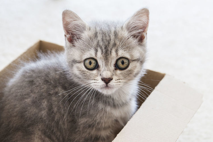 Cat in a box Animal Themes Baby Cat Cat Close-up Day Domestic Animals Domestic Cat Feline Fury Fury Friend Indoors  Looking At Camera Mammal No People One Animal Pets Portrait Whisker