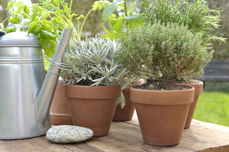Herb Sage Aromatic Botany Container Flower Pot Garden Gardening Equipment Growth Leaf Nature Outdoors Plant Plant Part Potted Plant Table Thyme Watering Can