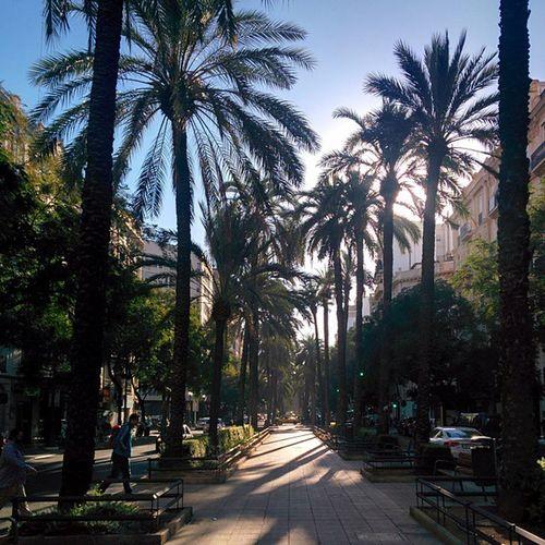 Preciosa mañana en la avenida del Antiguo Reino de Valencia! / kaunis aamu Valencian keskustan Bulevardilla. Nofilter Aitoespanja AAMU València espanja palmupuu palmtree palmera