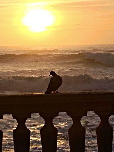 EyeEm Porto Porto EyeEm Best Shots Sunset