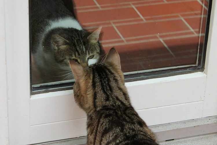 Pets Corner Face To Face Cats Staredown Eyeing You Curious Curious Cat Through The Glass Getting To Know Our Neighbors Hanging Out Two Is Better Than One Cat Cats Of EyeEm
