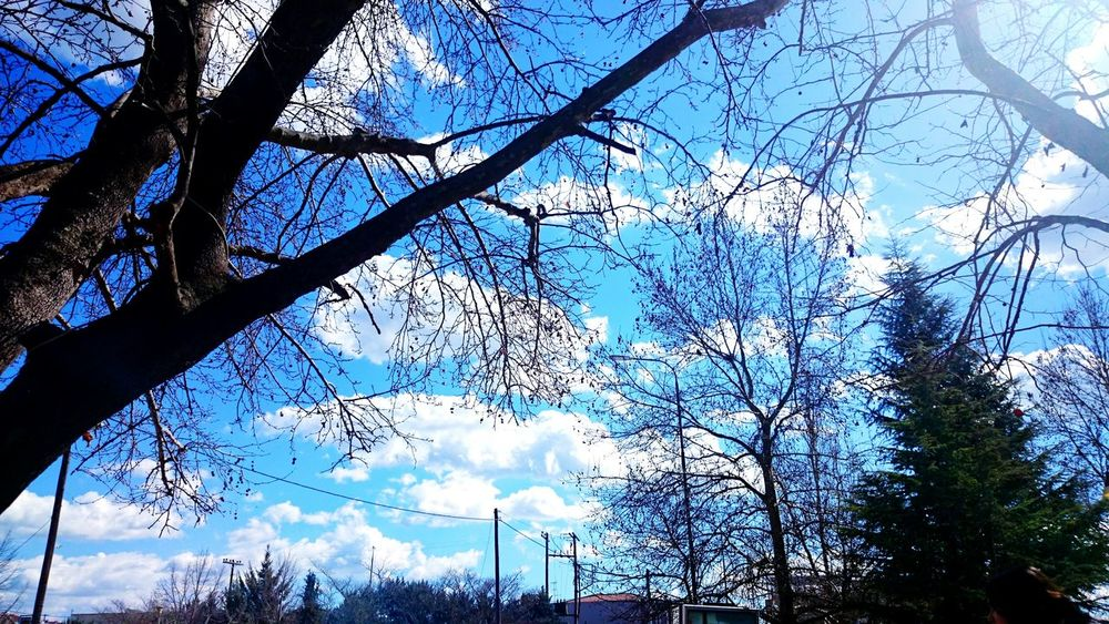 Beautiful Spring Tree Hello Everybody <3 Spring Spring! Spring Time Springtime Spring2015 Trees Sky Sky And Clouds