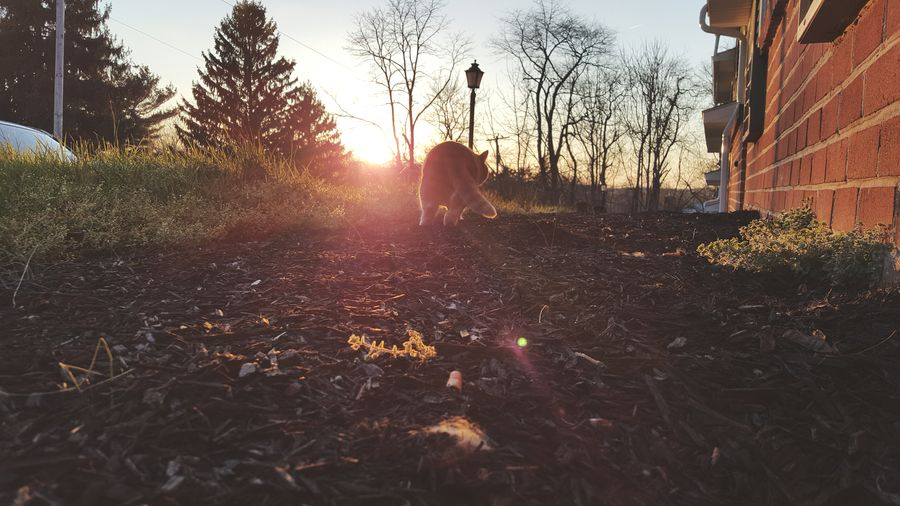 The Great Outdoors - 2016 EyeEm Awards Taking Photos Check This Out Showcase April Showcase: April EyeEm Gallery United States Cat Cat Walking Away Sunset Walking Off Into The Sunset End Of The Day Animal Photography Kitty Cat Sundown Evening Sky Evening Shot Goodbye Warming Glow Distance My Favorite Photo So Close But Yet So Far Beautiful Day Enjoying Life