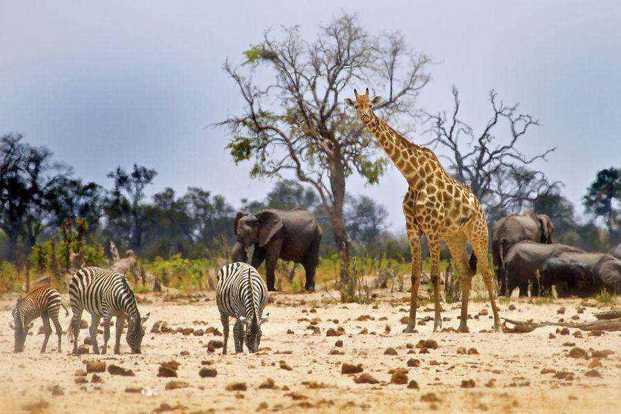 Animal Themes Animals In The Wild Arid Climate Mammal Safari Animals Savannah Standing Wilderness Wildlife Zimbabwe