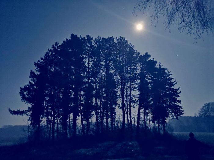 moonlight Moonlight Moonlightscape Mond Mondlicht Mondschein Tree Astronomy Forest Mountain Pine Tree Tree Area Pinaceae Blue Pixelated Moon