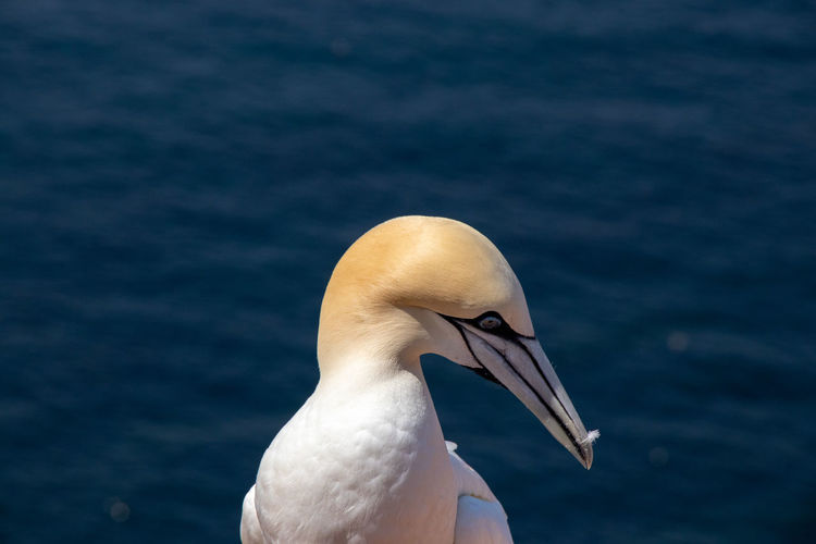 Close-up of a bird against the sea