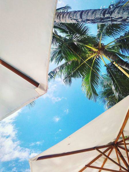 Relaxing Enjoying Life Boracay Philippines Umbrella Beachphotography Palm Trees First Eyeem Photo Magazine Cover Magazine VSCO Cam Xiaomiphotography Xiaomi XiaomiphotographCheck This Out