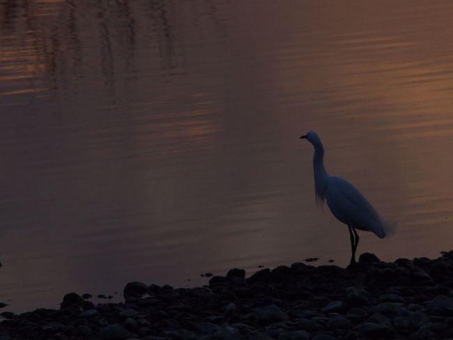 Twilight River Water_collection Nature_collection From My Point Of View EyeEm Nature Lover Bird Sunset