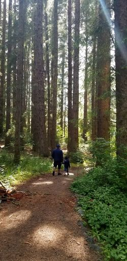 Humboldt County Sunlight Nature Outdoors Beauty In Nature Travel Seqouia Trees People Watching Tree Men Full Length Forest Togetherness Sky Woods Visiting Pathway Walkway Greenery Green Trail Countryside