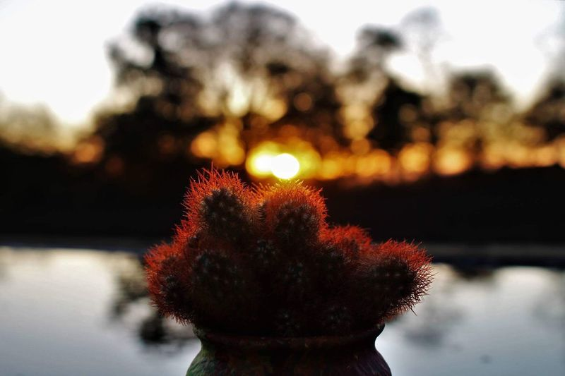 Evening Focus On Foreground Close-up Nature Outdoors Water Beauty In Nature Flower Sky No People Day Scotland Night Flower Head Photography Random Canon700D Canon Scotland 💕 Autumn Fall Cactus Orange