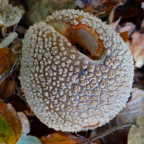 Strange Mushrooms Nature Autumn