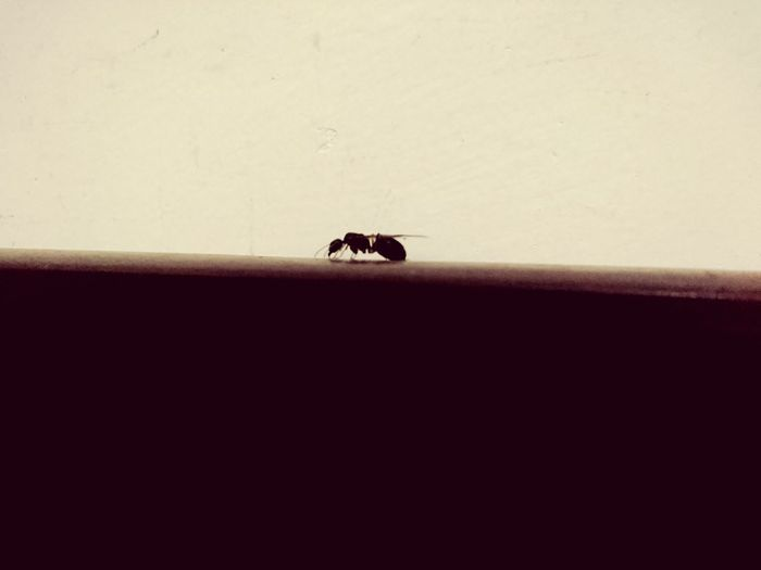 43 Golden Moments Ant Hiendat Showcase June Eyeem Collection Insect Insects  Insect Photography Welcome To Black Resist