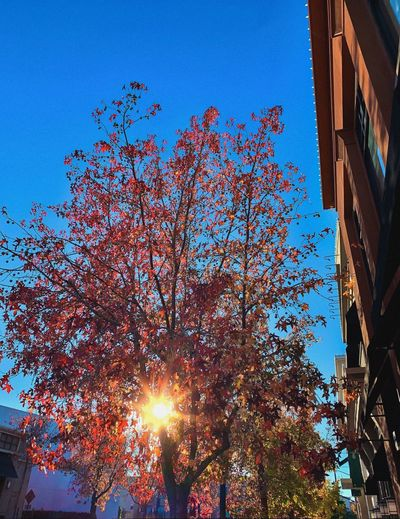 """City Light"" The late afternoon sun lights up a city block in a San Francisco, California East Bay town, Autumn 2018. Autumn 2018 California Suburban Exploration Autumn colors Fall Beauty Fall Colors Low Angle View Sky Built Structure Architecture Tree Nature Building Exterior Sunbeam Illuminated Clear Sky Sun City Sunlight"