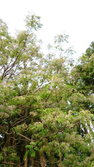 Nature Plant Wood - Material Wood Tree Branch Forest Sky Green Color Plant Life Wooden