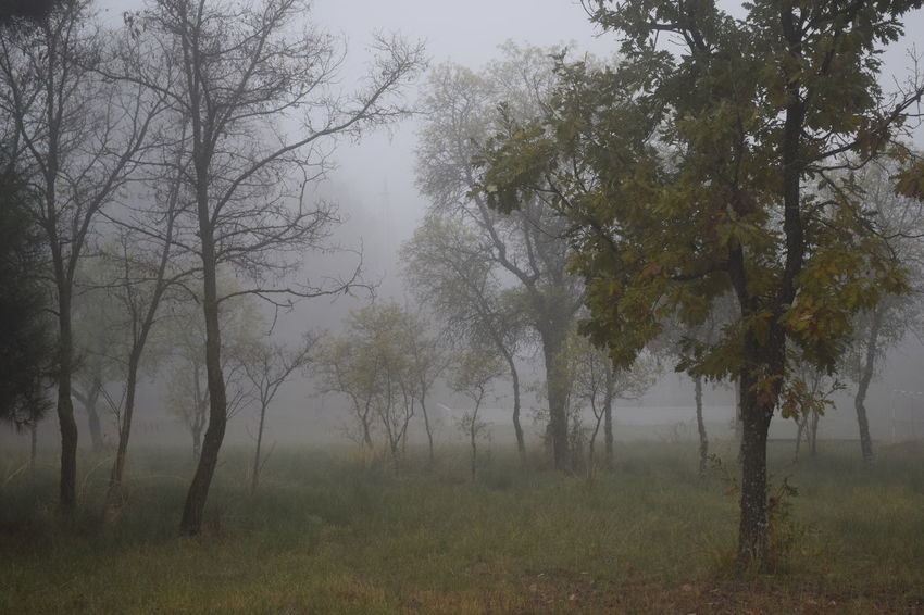 Tree Plant Fog Land Tranquility Tranquil Scene Beauty In Nature Forest Environment No People Tree Trunk Landscape