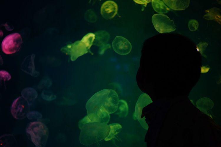Close-up of silhouette fish in aquarium