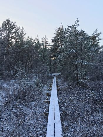 Footbridge Wodden Footbridge Nature Forest Sweden Outdoors Nature Photography Nature_collection Scandinavia Winter Frozen Nature Frozen Hike Hiking Hiking Trail Trail Path Lane Pathway Forest Path EyeEm Nature Lover Tranquility Tranquil Scene The Great Outdoors With Adobe