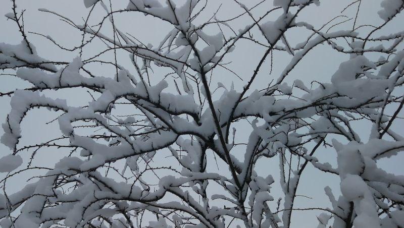 árbol nevado Snow Frozen Snow Covered Snowy Trees Cielo Blanco Blanca Paisaje árbol Nevados Nevado Nevada Invierno Snow Nieve Nature Beauty In Nature No People Day Tree Outdoors Winter Cold Temperature Sky Rural Scene Bare Tree Close-up Low Angle View Shades Of Winter