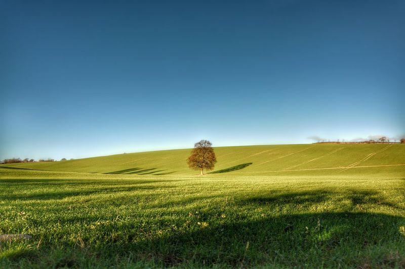 Tree. Landscape. Nature. Grass.