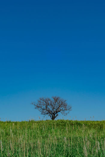 EyeEm Best Shots - Landscape Landscape Trees Sky Composition Simplicity Simple Photography EyeEm Best Shots Nikonphotography