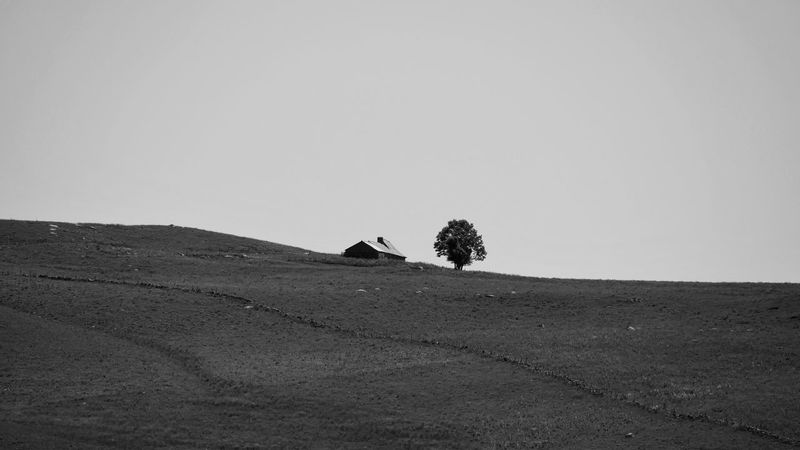 aubrac Outdoors Rural Scene Rural Farmland Nature Nature_collection Nature Photography Blackandwhite Black And White Black & White Bnw Bnw_collection Bw Bw_collection Farm Buron Tree Field Sky Landscape Silhouette Scenics Tranquil Scene Tranquility Countryside Non-urban Scene