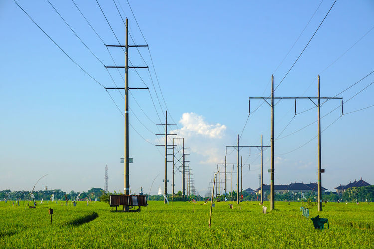 rice field Rice Paddy Rice Field Nature Electricity Pylon Technology Power Station Rural Scene Electricity  Fuel And Power Generation Cable Agriculture Social Issues Power Cable A New Beginning EyeEmNewHere