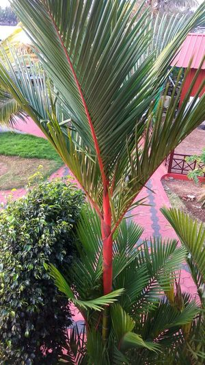 Growth Day Nature No People Outdoors Beauty In Nature Tree Freshness Flower Close-up Vacations Reflection Sunlight Landscape Kerala The Gods Own Country ;) Environment Coconut Palm Tree Coconutpalm Lakepalace
