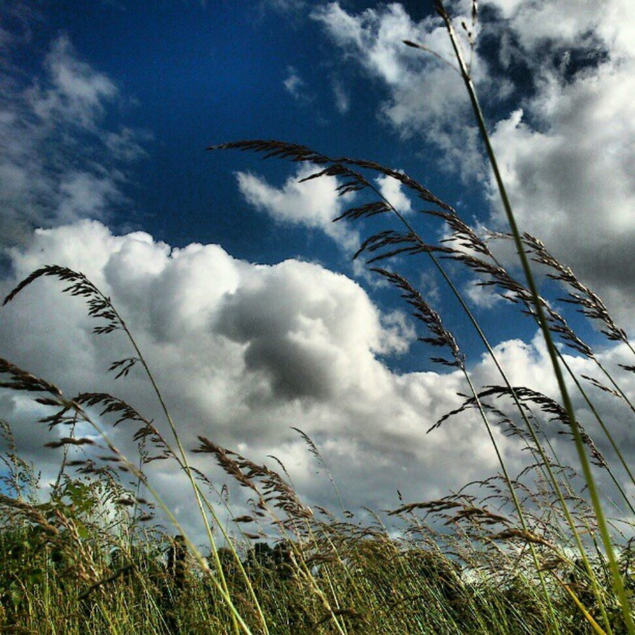 cloud - sky, sky, grass, nature, growth, day, low angle view, no people, outdoors, plant, beauty in nature, scenics