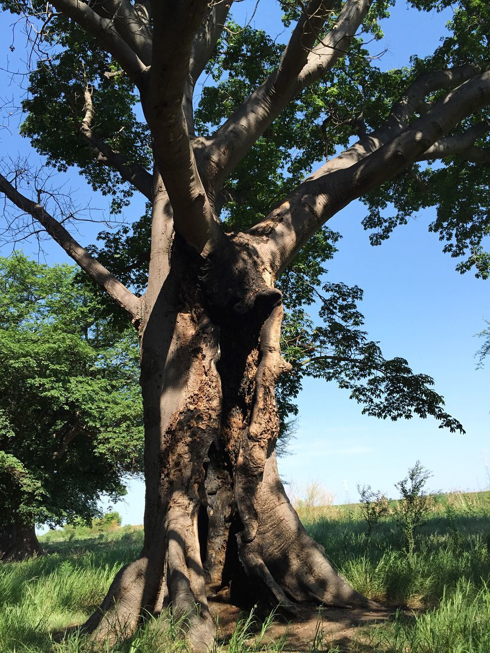 tree, tree trunk, nature, low angle view, day, growth, outdoors, branch, sunlight, beauty in nature, no people, tranquility, sky