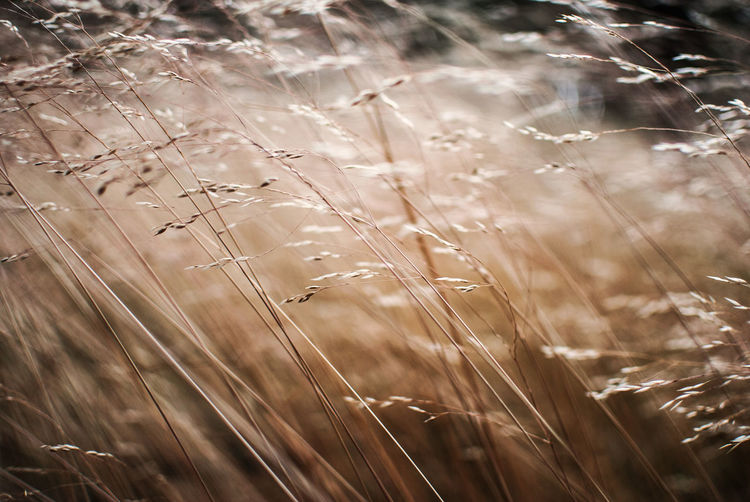 Backgrounds Beauty In Nature Check This Out Close-up Day Europe EyeEm EyeEm Gallery Focus On Foreground Fragility Grass Growth Hanging Out Landscape Light And Shadow Nature Nikon No People Outdoors Plant Poland Summer Sunset The Week Of Eyeem Tranquility