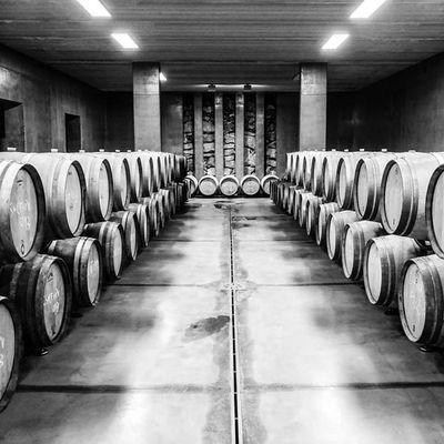 Vino Wine Cantina Cantine botte botti