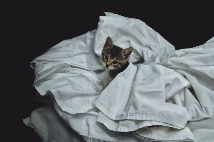 Close-up of kitten amidst white sheets against black background