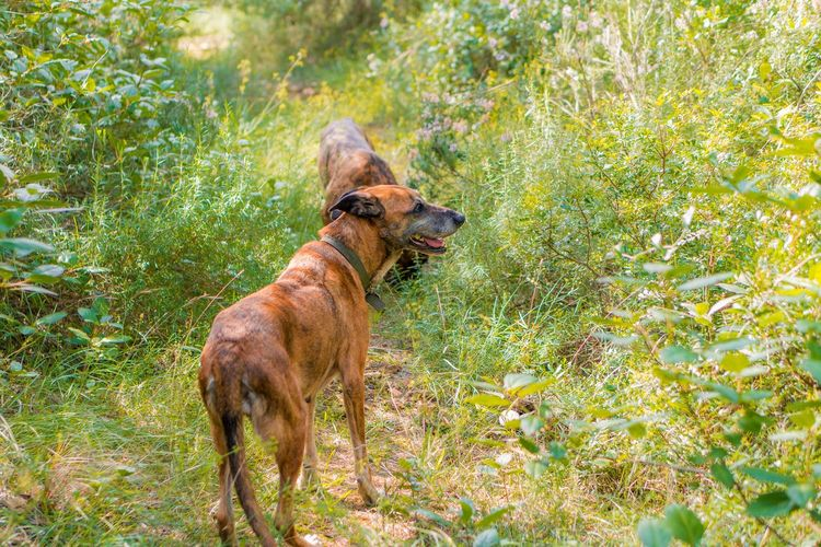 Animal Themes Animal One Animal Mammal Plant Domestic Animals Canine Dog Domestic Pets Vertebrate Grass Nature No People Green Color Day Brown Growth Tree Outdoors Mouth Open Dogslife Dogs