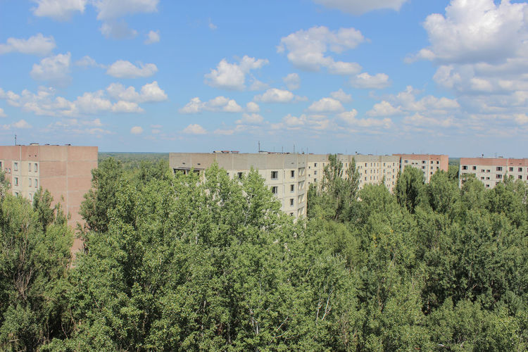 Panoramic shot of trees and plants against sky