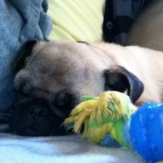 Cute Pets his sleeping