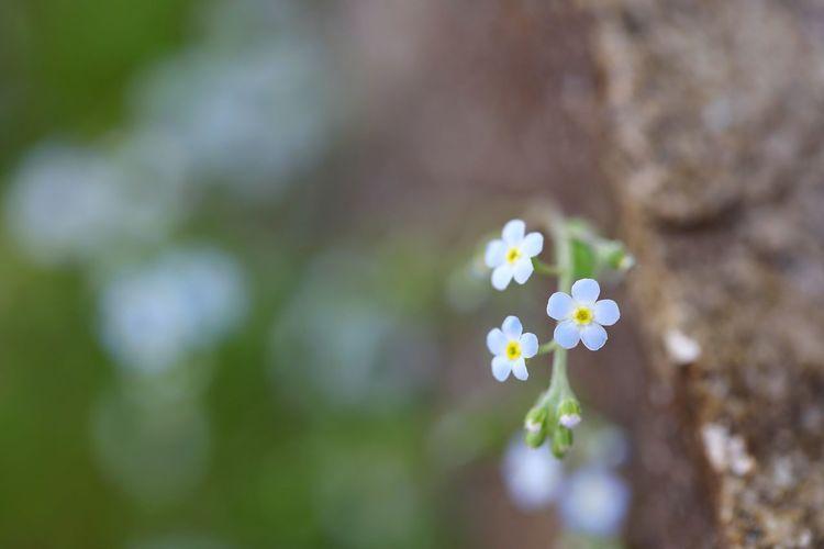 너무나 작은 그래서 매우 자세히 보면 너무 예쁜 - 꽃마리 . . #하루한컷 #꽃마리 #봄꽃 #작은꽃 #5DMARK4 #백마엘 #EF100MMF28LMACROISUSM Flower Head Flower Springtime Summer Multi Colored Close-up Plant
