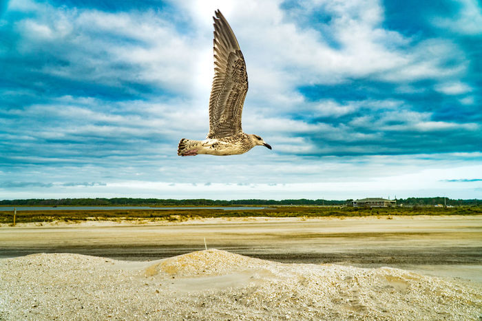 Animal Themes Animals In The Wild Beauty In Nature Bird Cloud - Sky Day Flying Landscape Mid-air Nature No People Outdoors Scenics Sky Spread Wings The Great Outdoors - 2017 EyeEm Awards Water