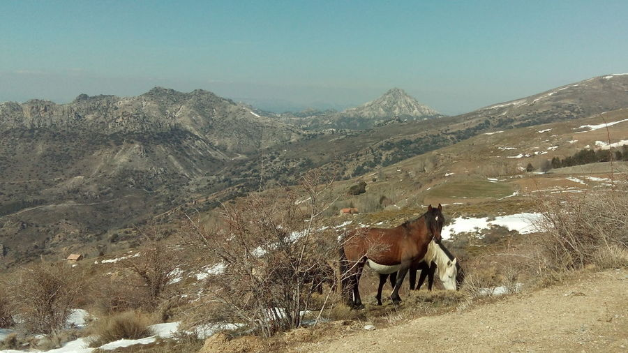 Horses Snow Mountain Blue Sky SPAIN No Filters