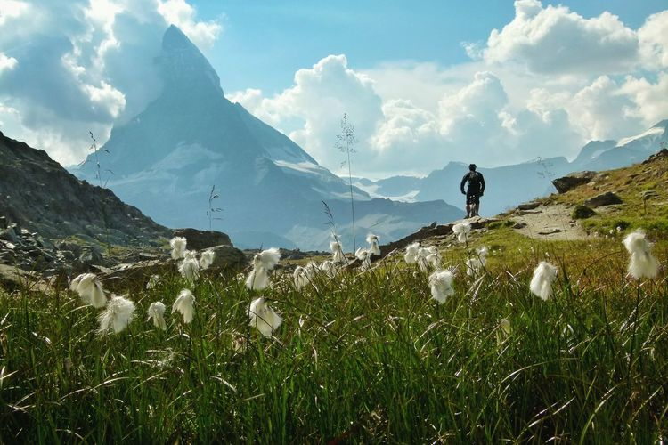 Wild Cotton Plants Growing Against Man On Bicycle At Mountain